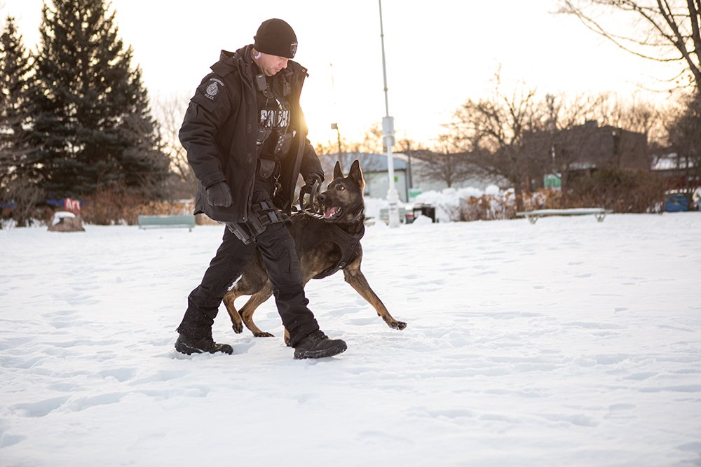 A police officer walks with through a snowy park with a dog from the K-9 units as the dog looks up at the officer